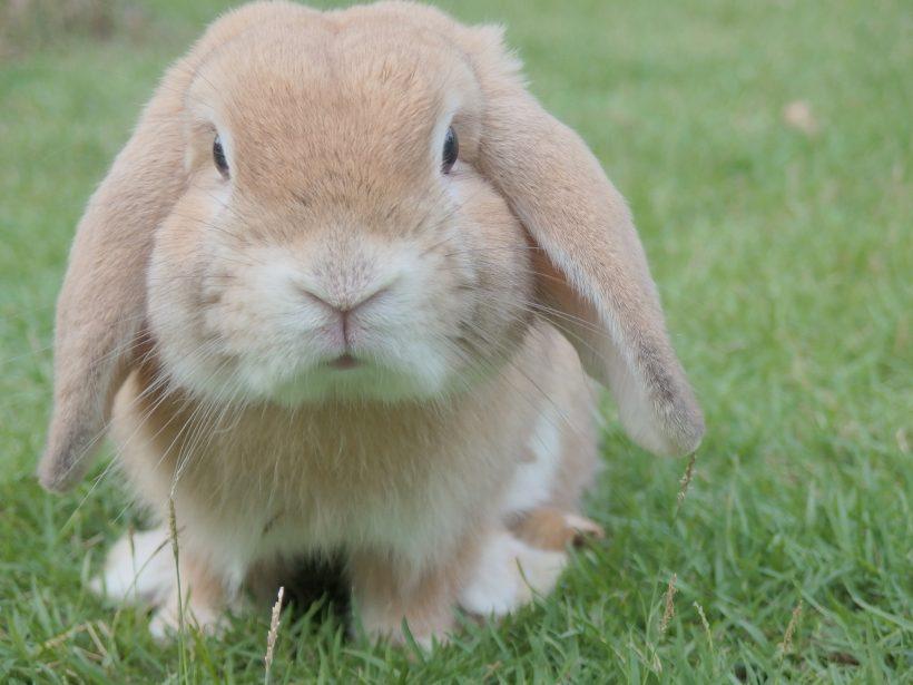 Der richtige Kaninchenstall für innen