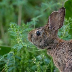 Der richtige Kaninchenstall für außen